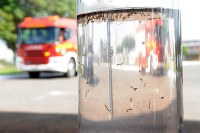 Unimep apoia iniciativa nacional contra o mosquito Aedes Aegypti